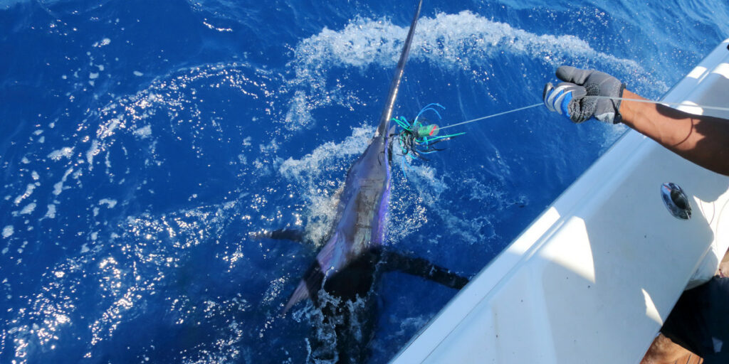 fishing for marlin in mexico