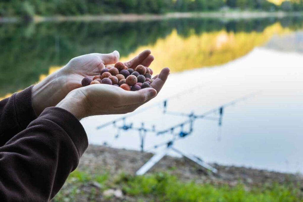 Best Boilies For Carp